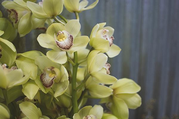 WeddingFl-orchid
